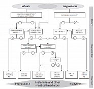 Diagnostic algorithm for patients presenting with wheals, angioedema, or both.